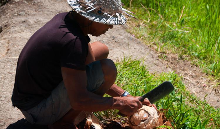 Man skalar kockosnöt, Gunung Kawi Bali