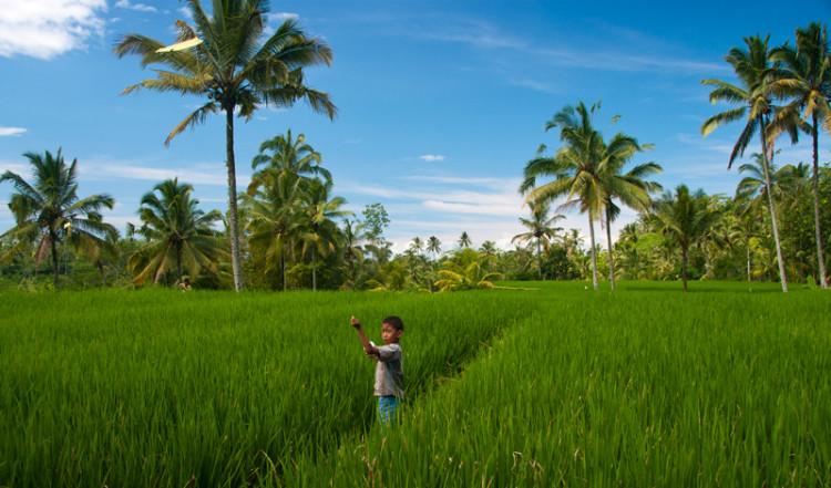 Liten pojke med en drake i risfält vid Gunung Kawi, Bali