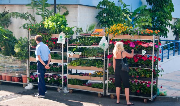 Anki köper pelargoner, på Manilvas fredagsmarknad