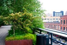Grönska vid utsiktsplats i High Line Park, New York