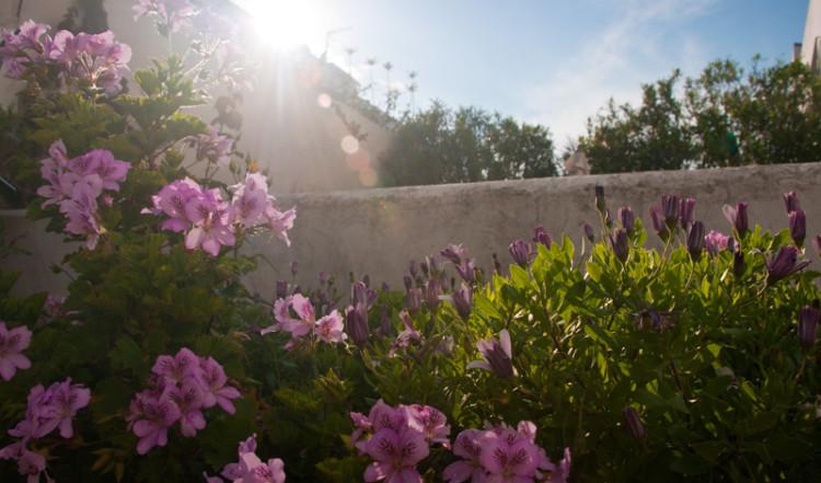 Blommor i trädgården i Monte Viñas