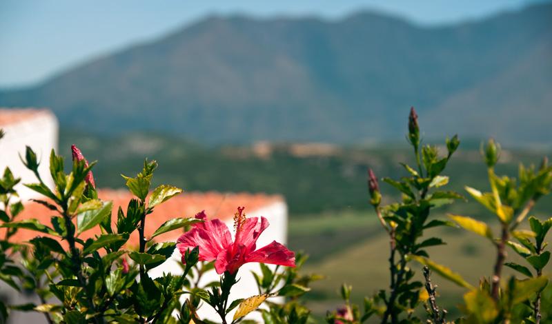 Blomstrande omgivningar i Monte Viñas, Manilva