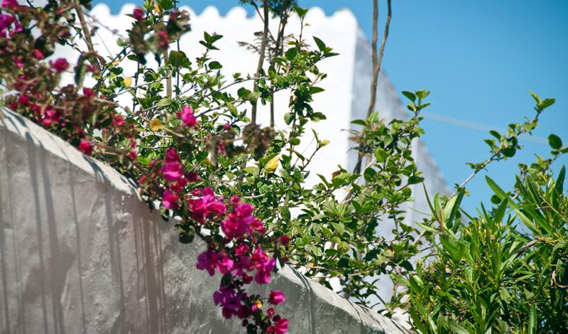 Blommor i trädgård i Monte Vinas