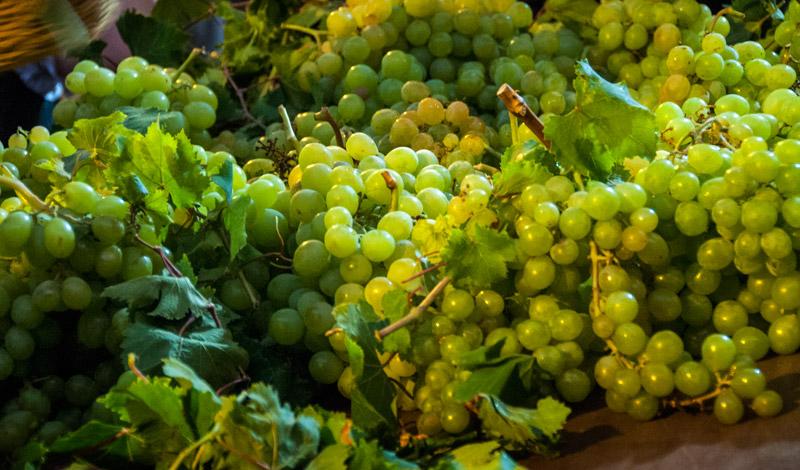 Vindruvor från Manilva