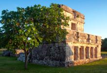 Apelsinträd vid maya ruin i Tulum