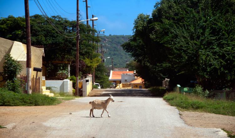 Gata i Rincon, Bonaire