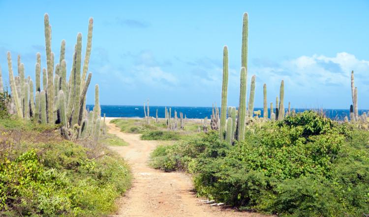 Kaktus längst östra kusten på Bonaire