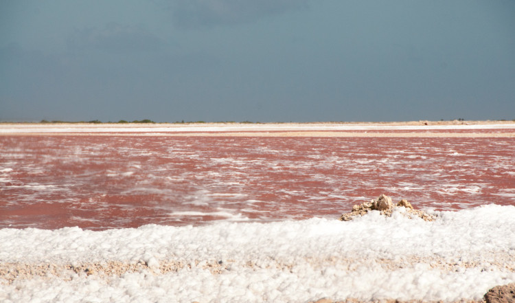 Rosa vaten vid saltproduktionen, Bonaire