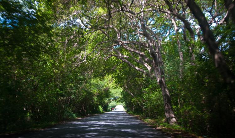 Lummig miljö och vackra vyer, utflykt runt Curaçao