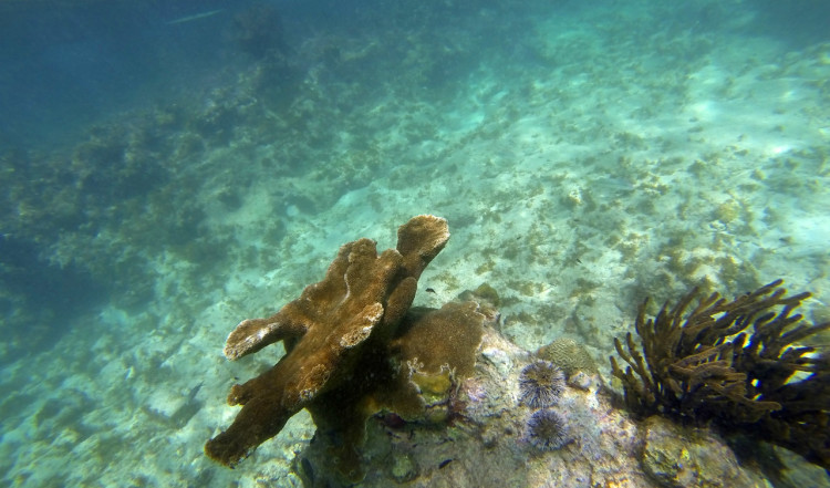 Snorkling vid Playa Lagun, Curaçao