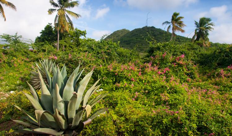 Vacker och lummig natur på norra Curaçao