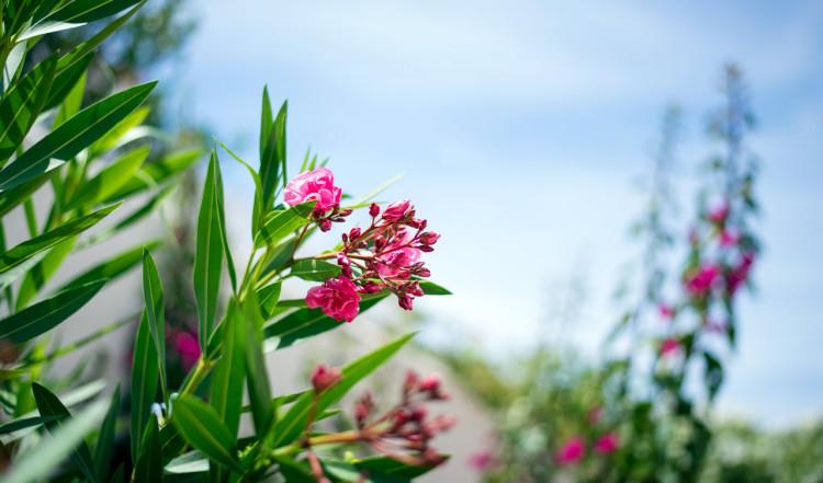 Blomma i vår trädgård i Monte Viñas