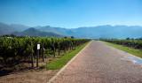 Deetlefs vingård i Breedekloof Sydafrika
