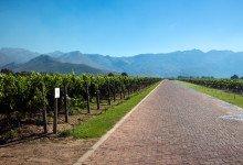 Vacker vingård med goda viner - Deetlefs Wine Estate, Sydafrika