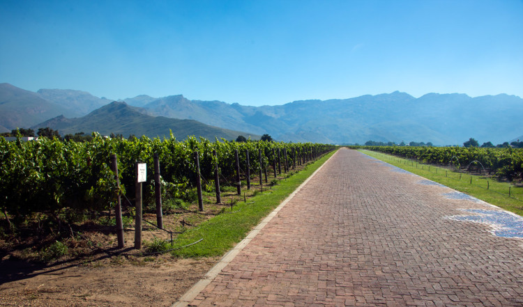 20141218-1636-91-Deetlefs-Wine-Estate-South-Africa