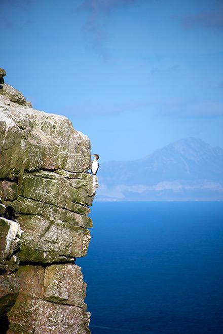 En fågel sitter vackert på berget vid Kapudden