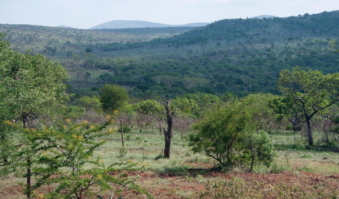 Vackra vyer över Zululand på vår väg till Mavela Game Lodge