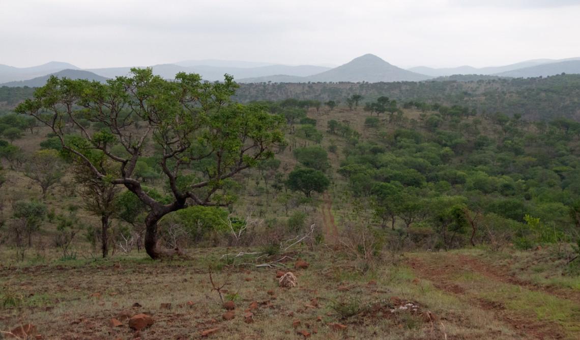Vackra landskap och vyer sett från eftermiddagens game drive, Mavela Game Lodge