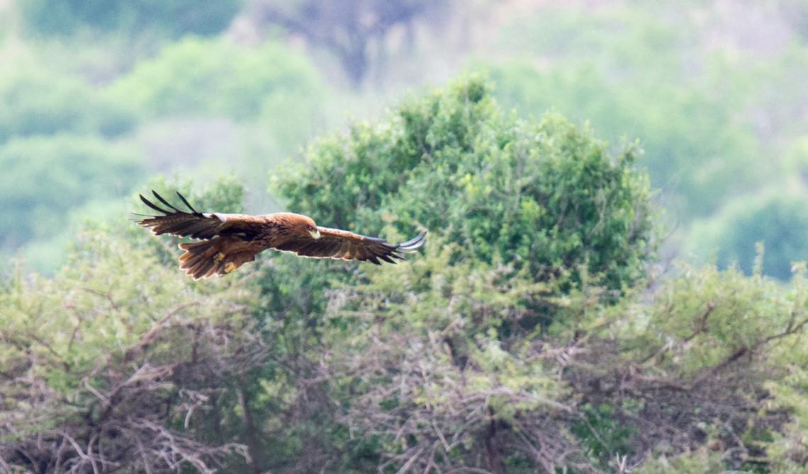 Vacker fågel flyger förbi oss, Mavela Game Lodge