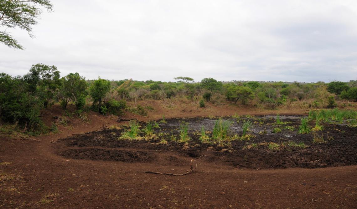 Delar av landskapet vid Mavela Game Lodge