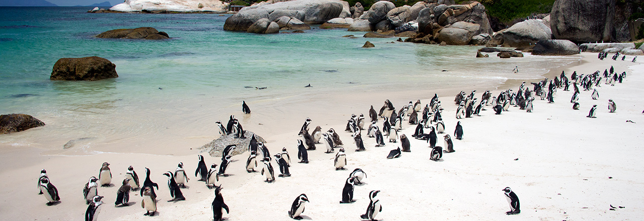 Top - Pingviner Boulders Beach