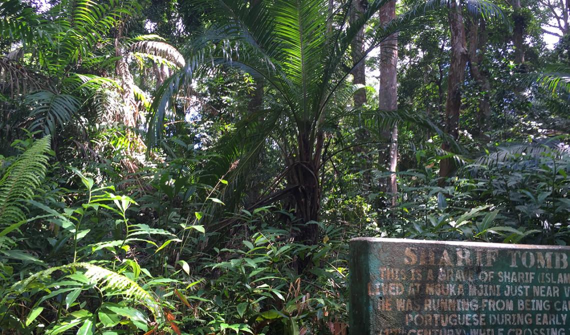 Sharif, en känd ledares, grav i djungeln på Pemba