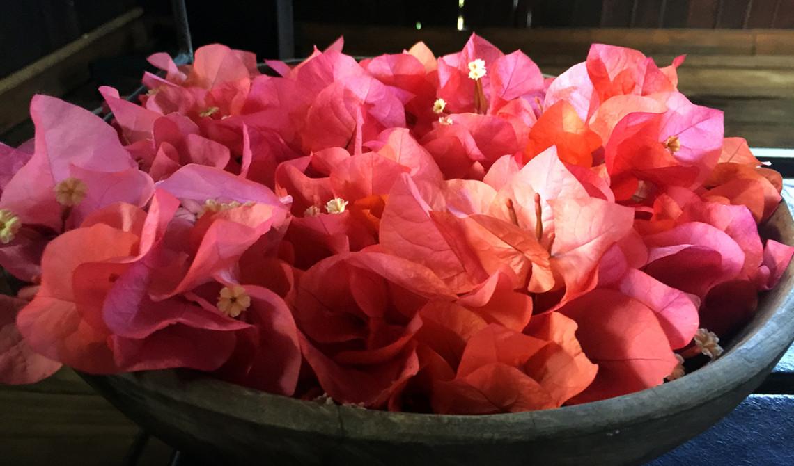 Vackra bouganvilla blommor under massage bänken