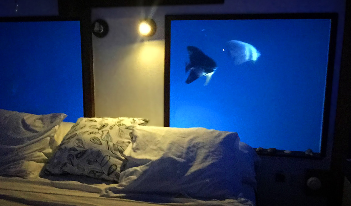 Fiskar runt om vårt sovrum