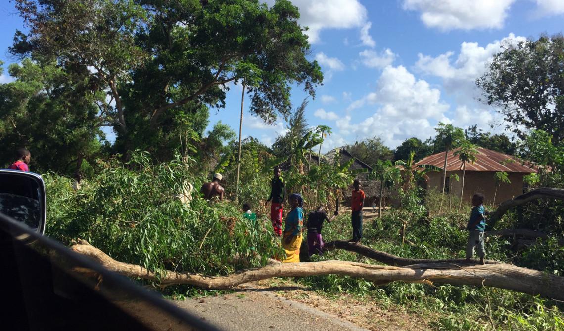 Det är tydligen inte ovanligt att träd fälls över vägarna på Pemba