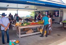Marknad i Saint-Luce, Martinique