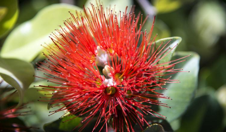 Närbild på röd blomma i området