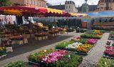 Blomsterstånd på marknaden i Luxemburg stad