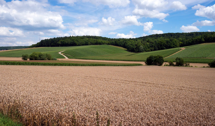 Champagne regionen nära Romery i Frankrike