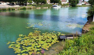 Vacker vy under bron i Damery i Grand Este i Champagne regionen i Frankrike