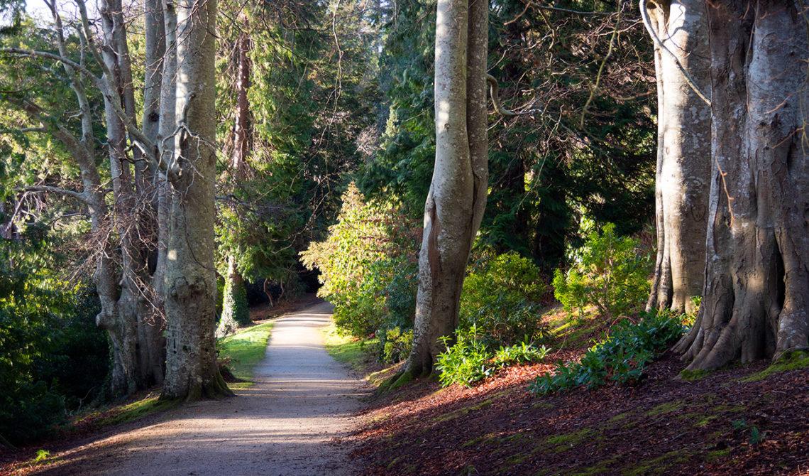 Längst med Rhododendron Walk, Powerscourt Gardens