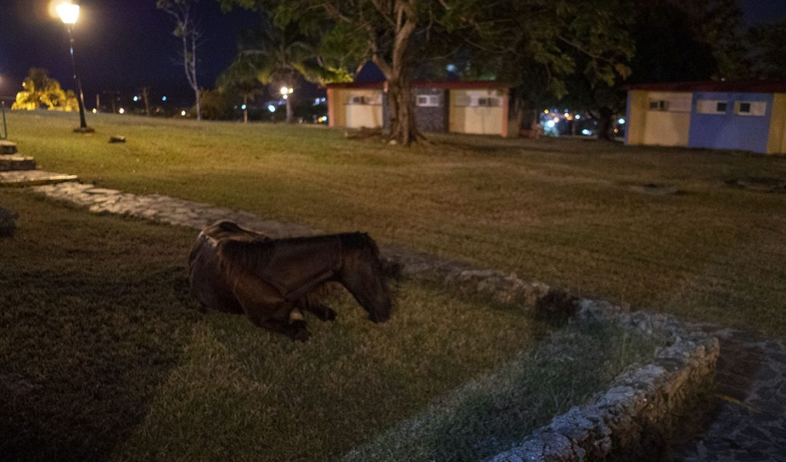En häst låg och vilade utanför vårt boende när vi kom tillbaka efter middagen